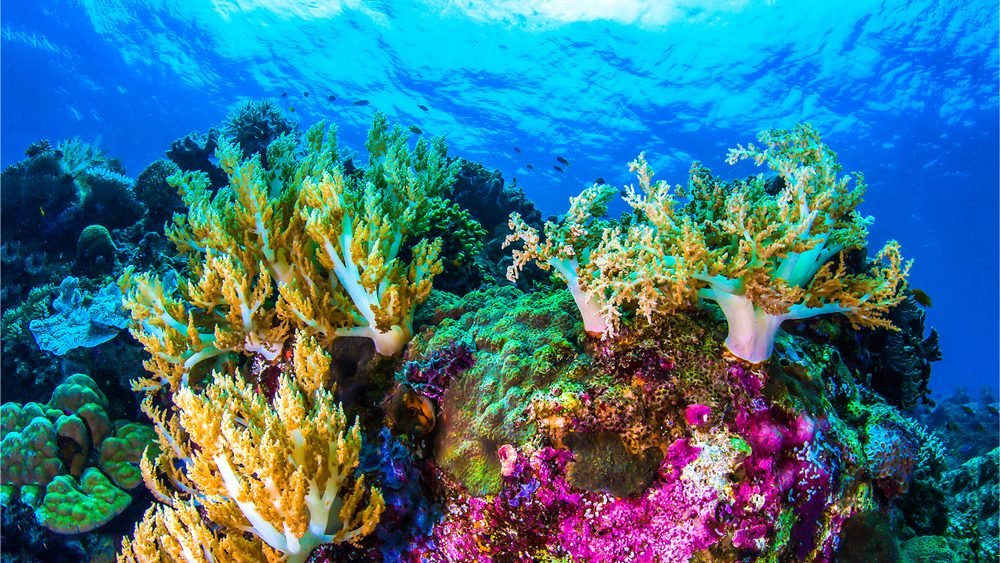 """""""NASA"""" Developed A Video Game To Study Coral Reefs And Human Threats To It: See Who Can Play It??"""